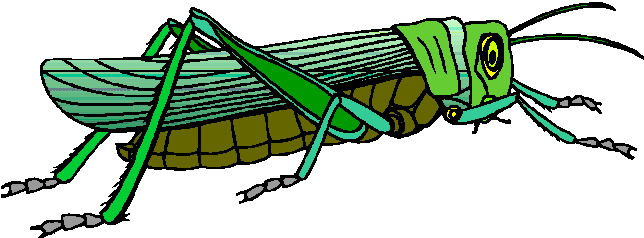 animated-grasshopper-image-0016