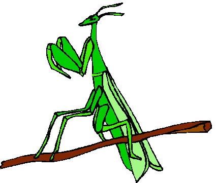 animated-grasshopper-image-0017