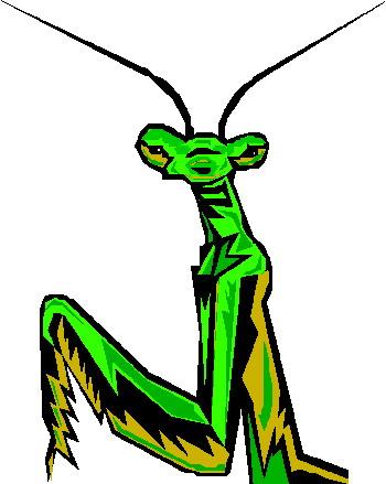 animated-grasshopper-image-0018