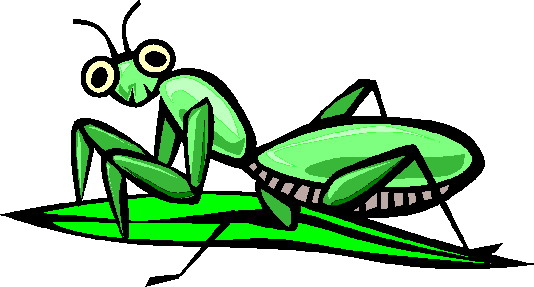 animated-grasshopper-image-0020