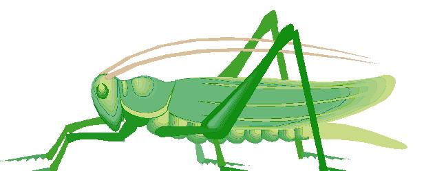 animated-grasshopper-image-0021
