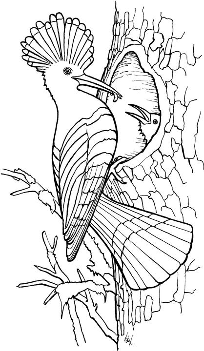 animated-coloring-pages-bird-image-0010