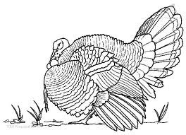 animated-coloring-pages-bird-image-0012
