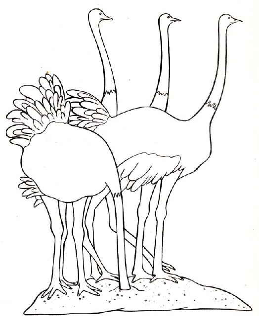 animated-coloring-pages-bird-image-0022