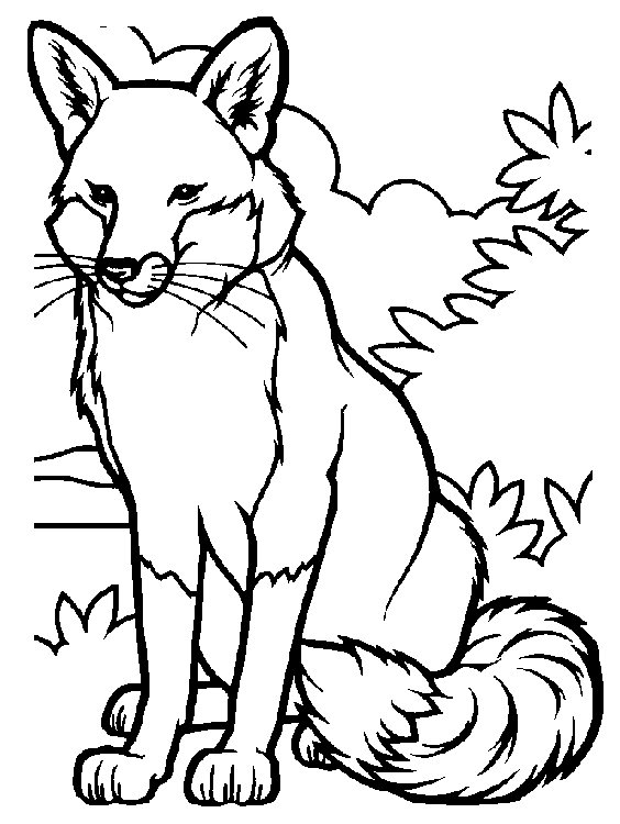 animated coloring pages fox image 0017
