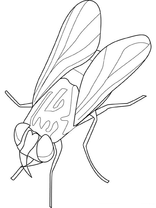 animated-coloring-pages-insect-image-0019