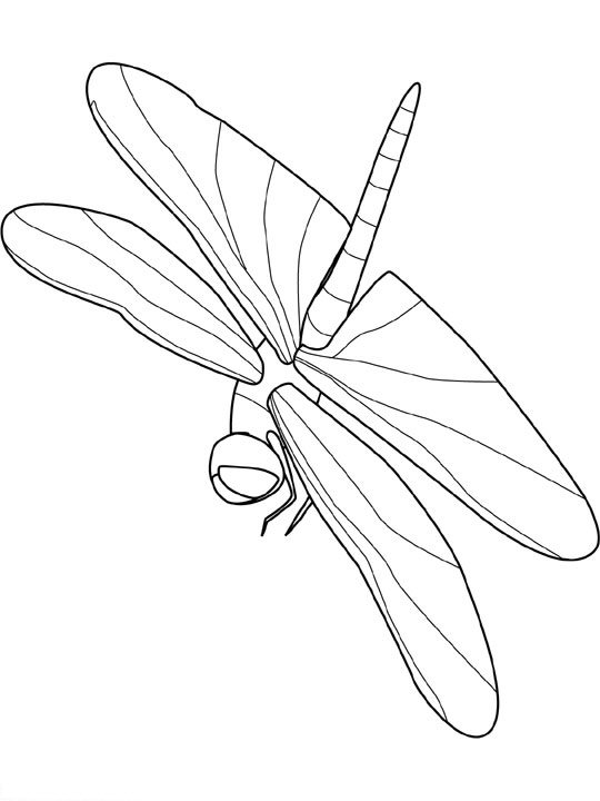animated-coloring-pages-insect-image-0020