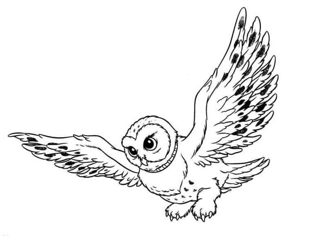 Coloring Pages Owls Animated Images Gifs Pictures Animations