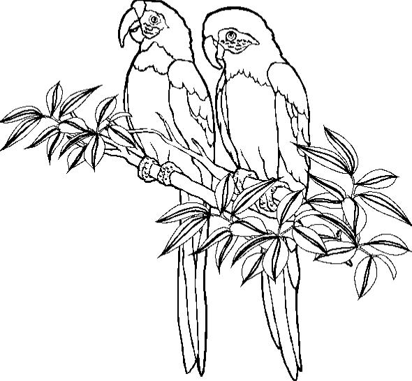 animated-coloring-pages-parrot-image-0012