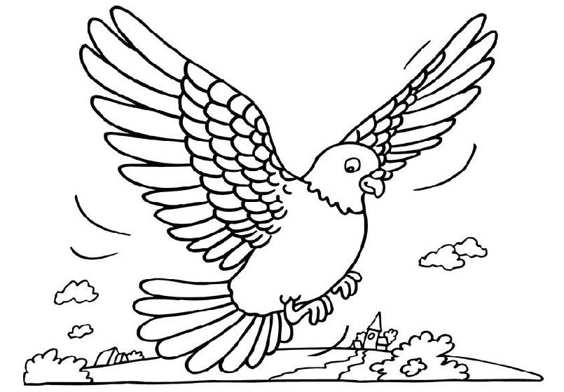 animated-coloring-pages-pigeon-image-0003