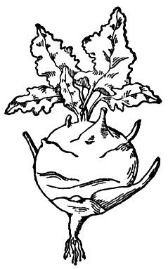 animated-coloring-pages-vegetable-image-0016