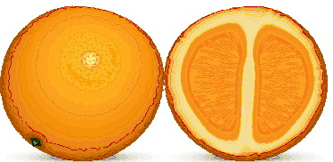 animated-orange-image-0017