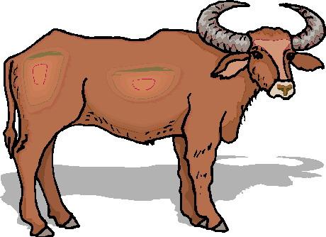 animated-bull-image-0038