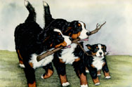 animated-bernese-mountain-dog-image-0261