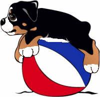 animated-bernese-mountain-dog-image-0268